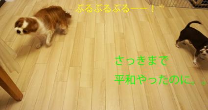 20170310 (19)