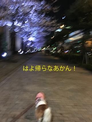 20170409 (19)