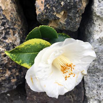 PARQUE URBANO DE PONTA DELGADAに咲く花