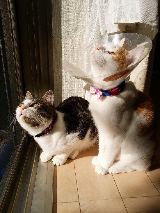 ムン&ヴィン-13