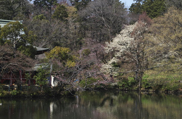 井の頭公園-081