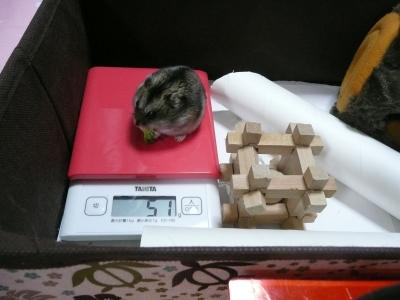 P1400558体重測定