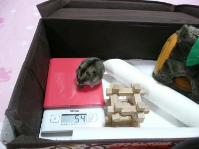 P1400561体重測定1