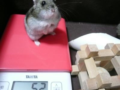 体重増加1