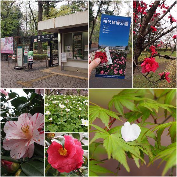ゆうブログケロブログお花見と花まつり (29)