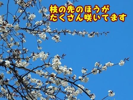 P3253339a.jpg