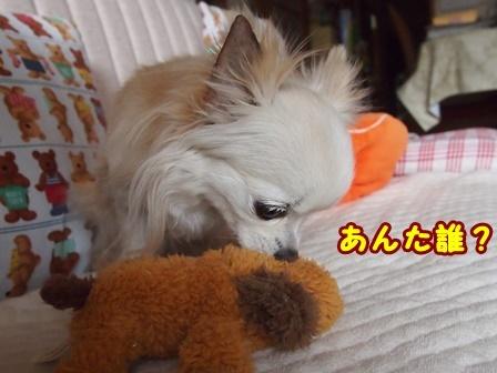 blog9084a.jpg