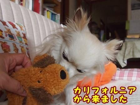 blog9085a.jpg