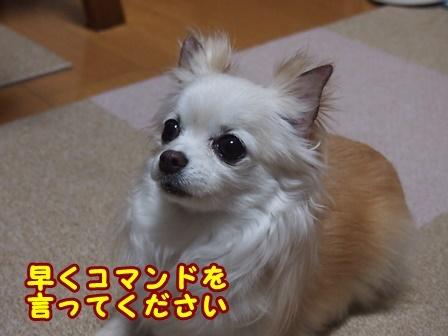 blog9197a.jpg