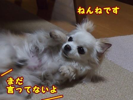 blog9198a.jpg