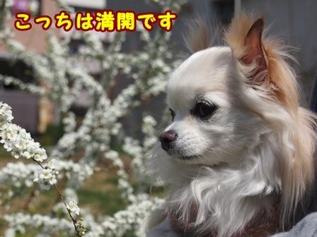 blog9288a.jpg