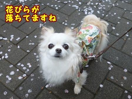 blog9346a.jpg
