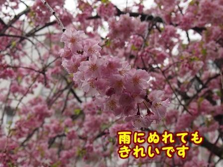 blog9358a.jpg