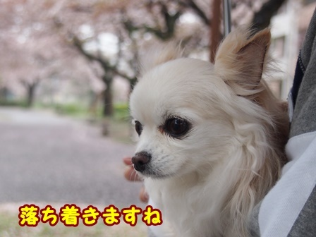blog9361a.jpg