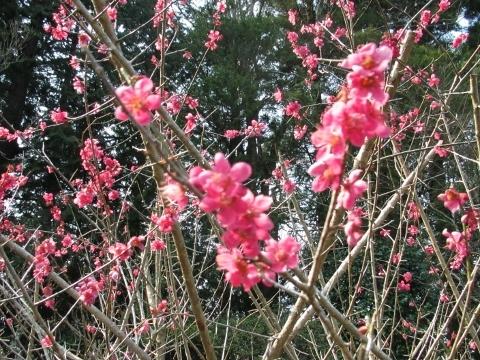2017年3月19日・福泉寺・お花③