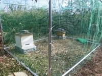 スズメバチ対策ネット