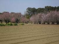 春の養蜂場