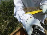 こんなふうに両足に花粉団子をつけて返ってくるんです