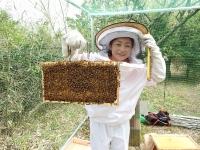蜂児も順調♪