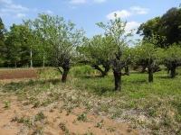新緑の養蜂場