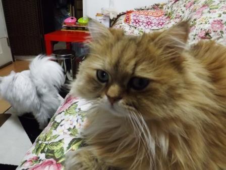レオンとマリー (3)