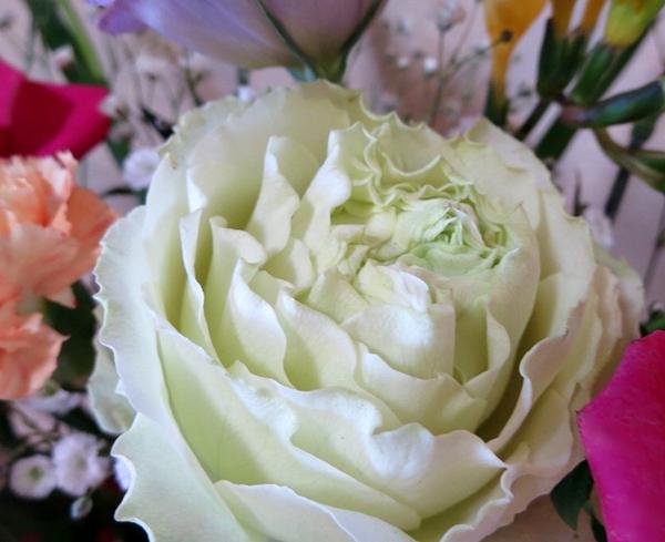 薔薇花びら