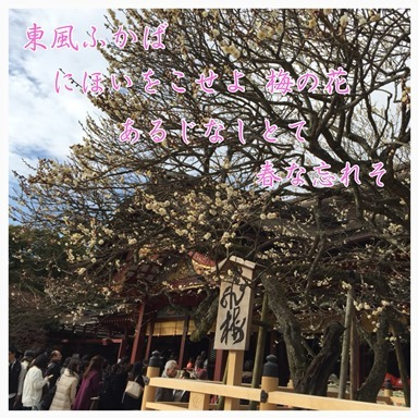 IMG_9972_20170212140056bb5.jpg