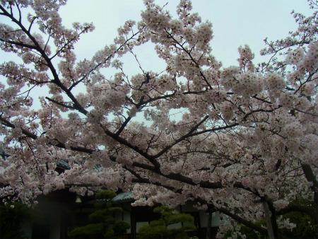 syukusyo-RIMG0715_20170409101426ee0.jpg