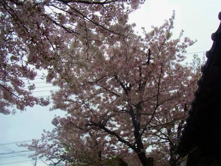 syukusyo-RIMG0735_2017041516242640c.jpg