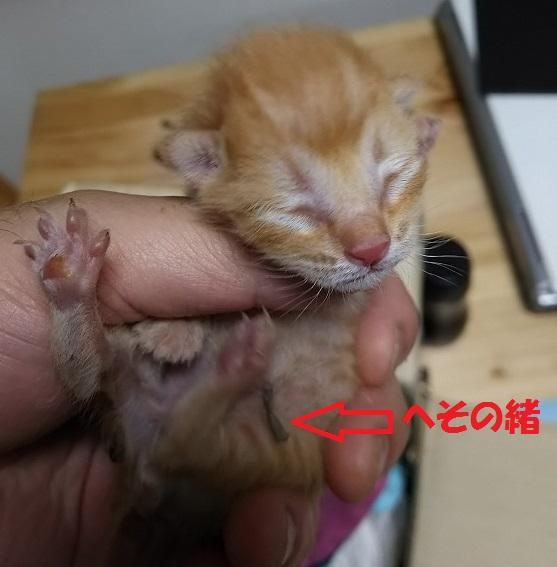 山西家拾った子猫