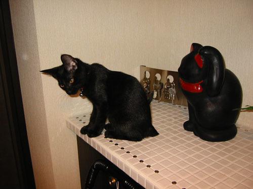 黒猫とはにべえ