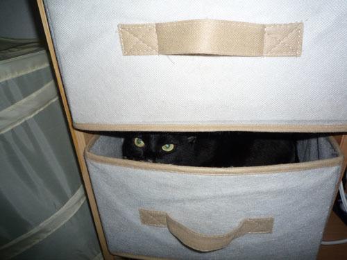 黒猫 目が光る.