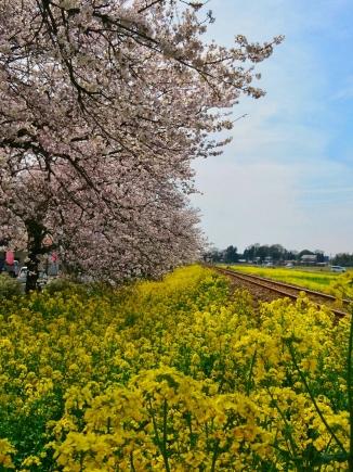 2017桜町1