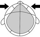 1OCTF-IN-T.jpg