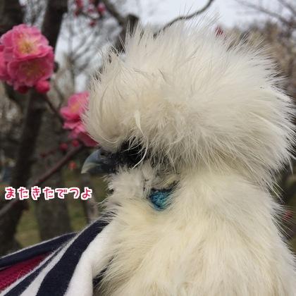 二太2017/03/06-1