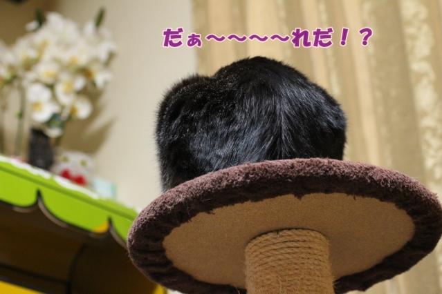 2017 04 11_9607-1