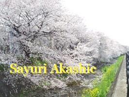桜 アカシックレコードリーダーさゆり 17cb10