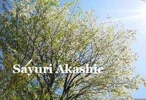 アカシックレコードリーダーさゆり 春の日差しと樹木