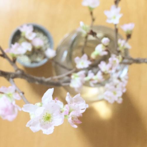 20170215桜_convert_20170215181020