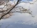 2017oomorisiroyamakouen5-web600.jpg