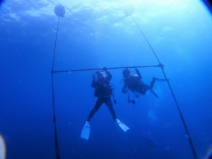 勝山かっちゃまダイビング珊瑚サンゴ (3)