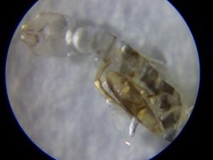 5海中のプランクトン採集 (1)