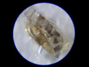 5海中のプランクトン採集 (2)