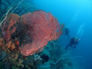 2勝山かっちゃま水樽みずだるサンゴ軟体サンゴ (7)