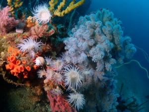 2勝山かっちゃま水樽みずだるサンゴ軟体サンゴ (8)