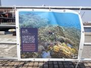 タラ号新港埠頭ふ頭 (14)