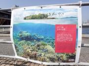 タラ号新港埠頭ふ頭 (17)