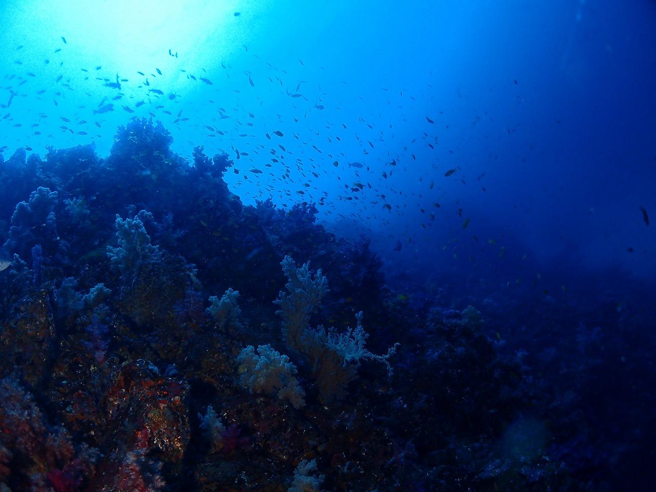 真っ青な伊豆海洋公園 (4)