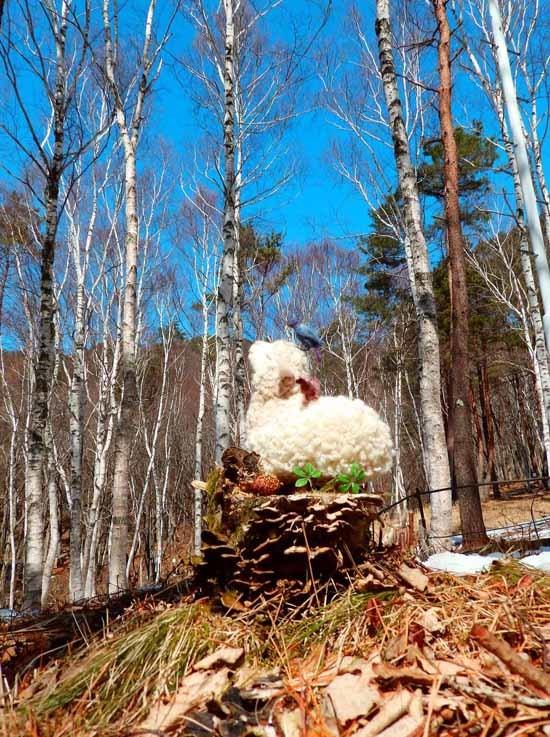 森羊のクーシャ2017-4