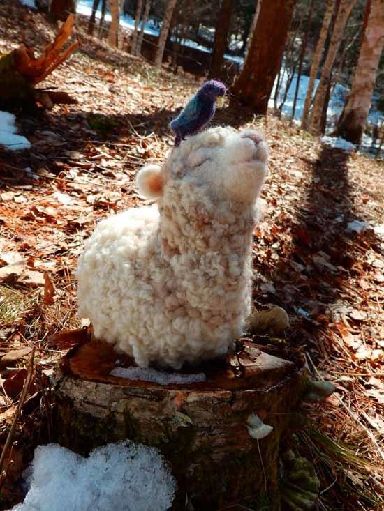 森羊のクーシャ2017-5